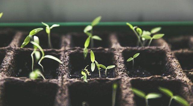 Dags för utplantering